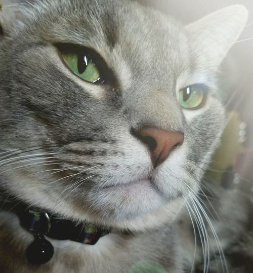 Pensive Fellow Cat Capture The Moment Extreme Close-up The Song Of Color Fluffy Love Furry Love Pets Domestic Animals Domestic Cat Pet Portraits Visual Creativity