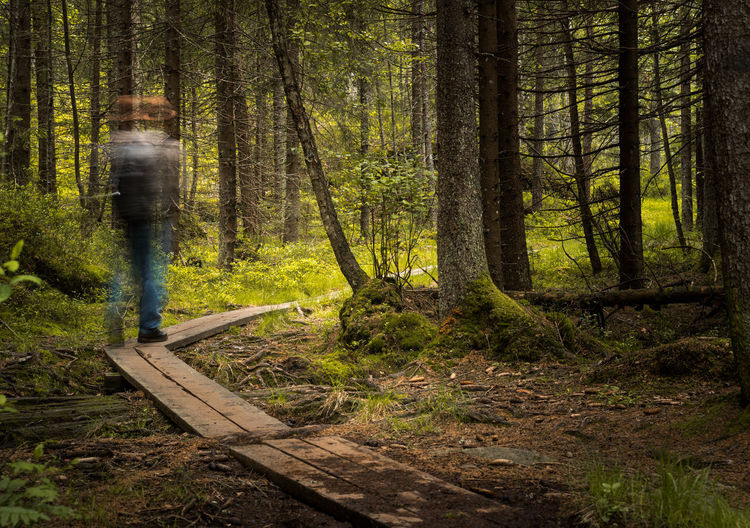 Blurred motion of man walking in forest