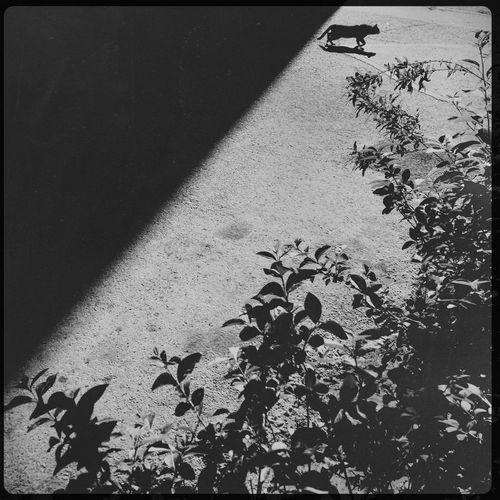 Streetphotography Blackandwhite Monochrome Hipstamatic