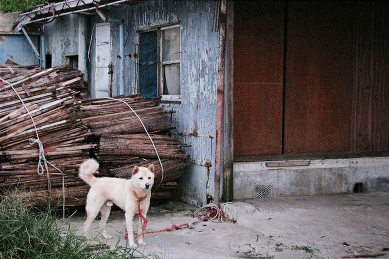 Yeosu Dog EyeEm