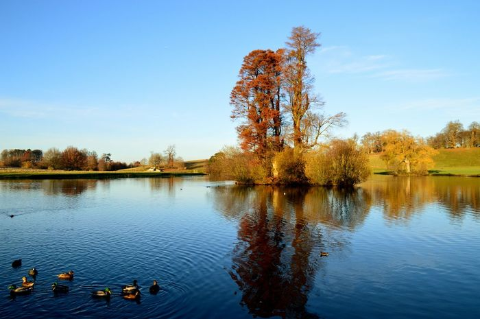 Autumn view ovee the lake at Petworth House. EyeEm Nature Lover EyeEm Gallery Petworth Park National Trust Water Tree Lake Reflection Nature Sky Outdoors Scenics Beauty In Nature Tranquil Scene Tranquility No People Day Clear Sky EyeEmNew Here EyEmNewHere The Week On EyeEm EyeEmNewHere Beauty In Nature Nature Nikonphotograhy Ducks At The Lake National Trust