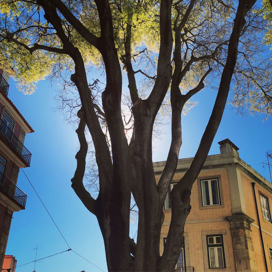 Sun behind tree and building on clear blue sky day in Lisbon, Portugal Lisbon Portugal Tree Architecture Sky Built Structure Plant Building Exterior Nature Building Trunk Day Tree Trunk Outdoors Low Angle View Branch No People Growth Residential District City House Cloud - Sky