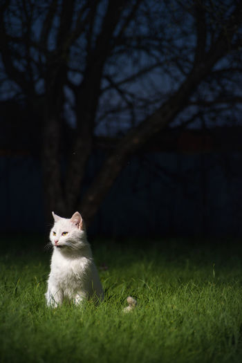 Cat sitting on a field