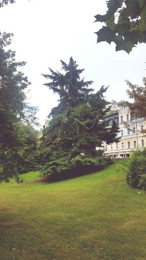 Marienbad Czech Republic Czech Garden Tree_collection  Trees