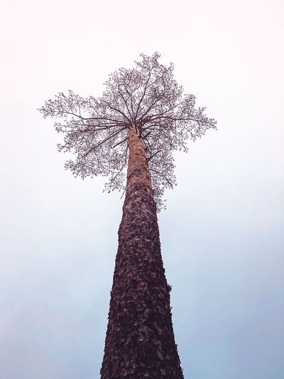 Lonely dandelion tree Tree Plant Sky Nature Low Angle View Tree Trunk Trunk No People Clear Sky Beauty In Nature Tall - High Day Growth Tranquility Outdoors Branch Single Tree Travel Destinations Tourism Silhouette Treelined Minsk Dandelion Flower Aerial View