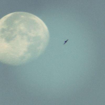 La Luna esta mañana a lo suyo. Skylovers Zaragoza Lunalunera Sky bird CaptureTheMoment igersaragon igerszgz moon Zaragozadestino