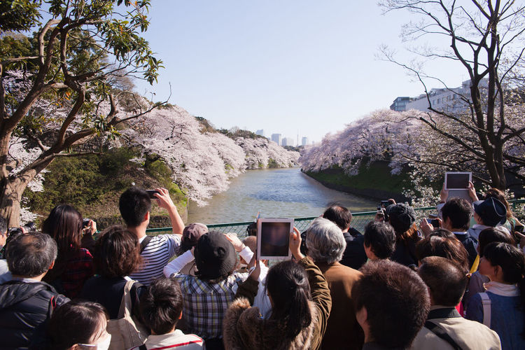 Rear View Of People Photographing Cherry Blossom Trees By Canal From Footbridge