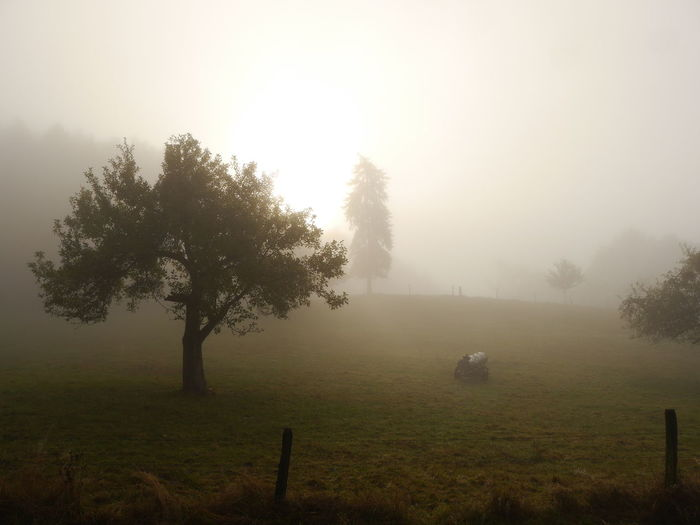 More moody Foggy pic Fog... Tree Nature Landscape Horizontal Growth Tranquility Hazy  Beauty In Nature No People Outdoors Day Naturephotography Vacation Time