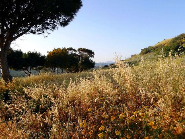 Agrigento Alberi Beauty In Nature Campi Cielo Azzurro Colline Fiori Flowers Growth Nature No People Outdoors Scenics Sicilia Tramonto Tranquility Tree Vegetazione