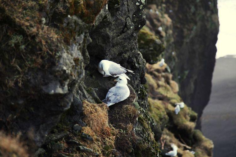 Sommergefühle EOS 6D EF 24-105mm Bird Iceland Landscape
