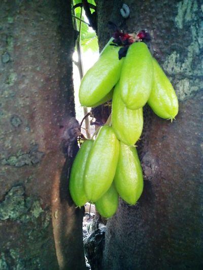 Fruit Belimbing Buluh