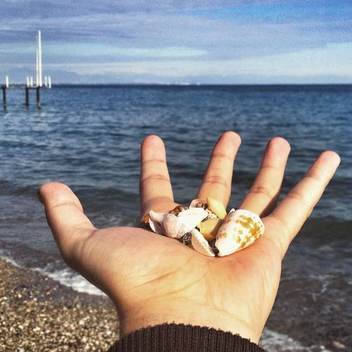 Close-Up Of Hand Holding Shells By Sea