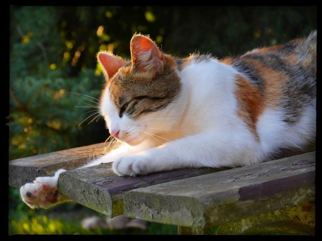 With Big Steps To Autumne🍃🍂 relaxing in the Autumn sun HIT ME WITH YOUR BEST PAW