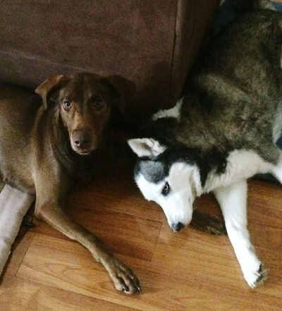 Domestic Animals Pets Buddies! Dogs Lovemydogs Hanging Out