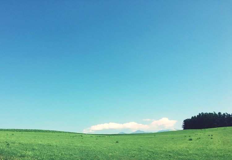 Field Blue Grass Nature Landscape Copy Space Tranquility Beauty In Nature Day Sky Outdoors Clear Sky Tree Green Color