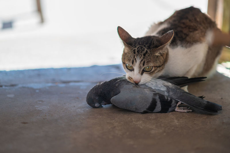 Portrait of a cat resting