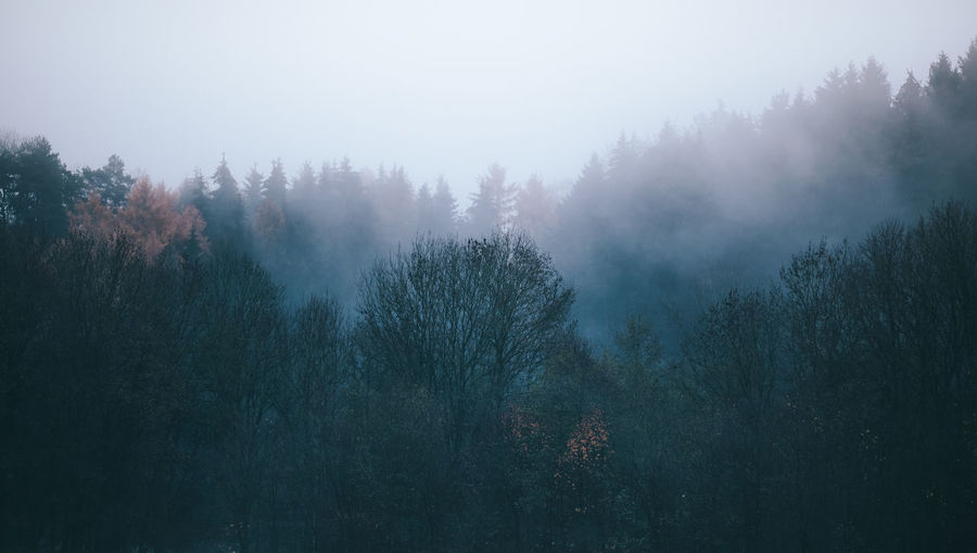 Trees In Forest Under Foggy Weather