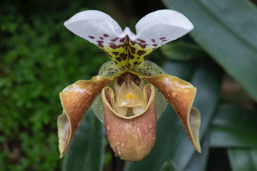 Orchid Macro Flower Petal Flower Head Fragility Nature Beauty In Nature Growth Close-up Freshness Plant Focus On Foreground No People Blooming