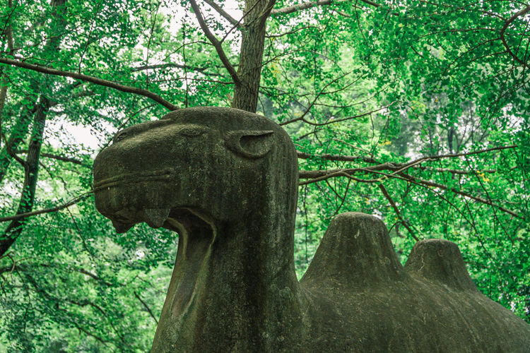 Low angle view of statue against tree trunk
