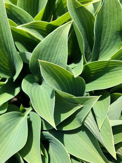 #plant Plant