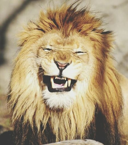 SmileAtYourHaters!!! King Shhhh... THEREWILLBEHATERS LionLife