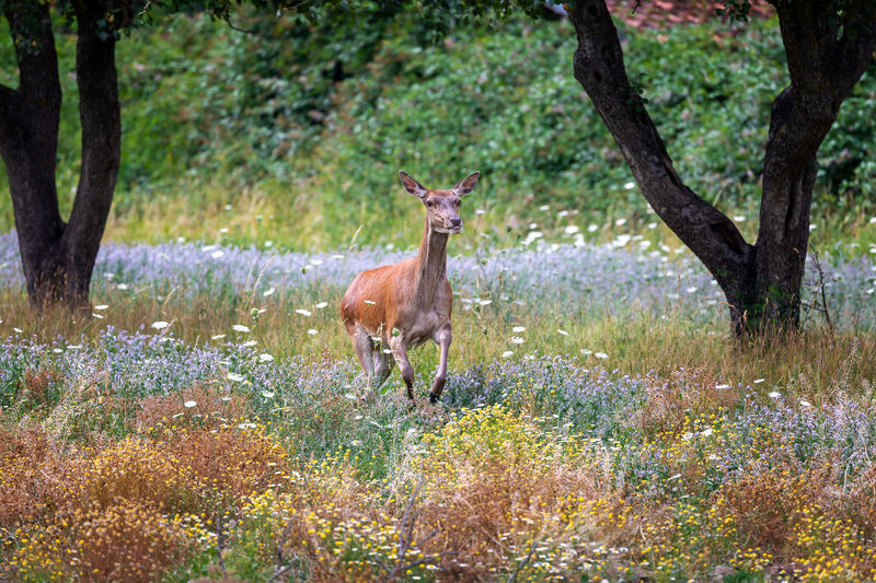 Deer standing in a forest