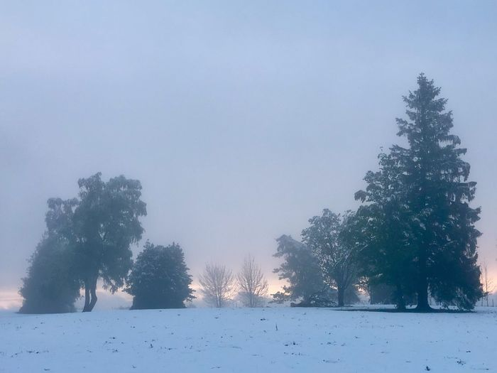 Winter im Sonnenuntergang Mai 2019 Tree Plant Cold Temperature Snow Winter Sky Nature No People Outdoors Snowing Land