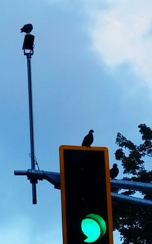 Sky Low Angle View Raven - Bird Outdoors Open Edit Adapted To The City Minimalism Pigeons Life Street Light Blue Silhouette And Sky The City Light BYOPaper! The Street Photographer - 2017 EyeEm Awards Gridlove Rethink Things