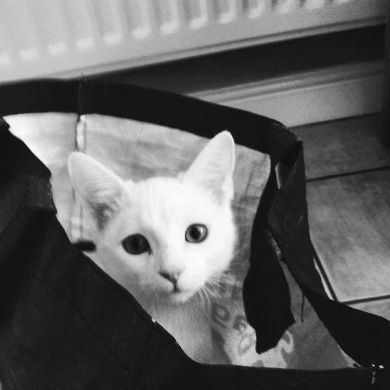 Cute Pets Cat Kitten