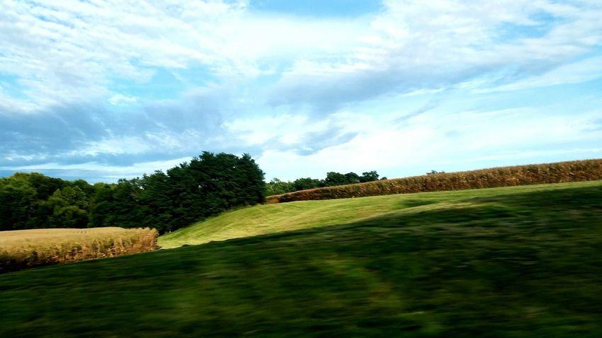 Illinois Farmland Countryside Tree Sky Grass Cloud - Sky Landscape