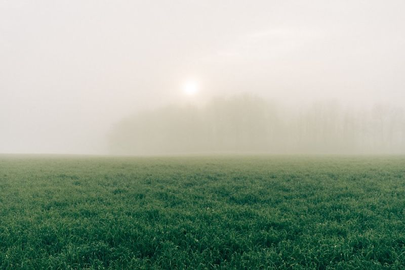 Grass Agriculture Beauty In Nature Day Field Fog Freshness Grass Landscape Meadow Nature No People Outdoors Rural Scene Scenics Sky Tree