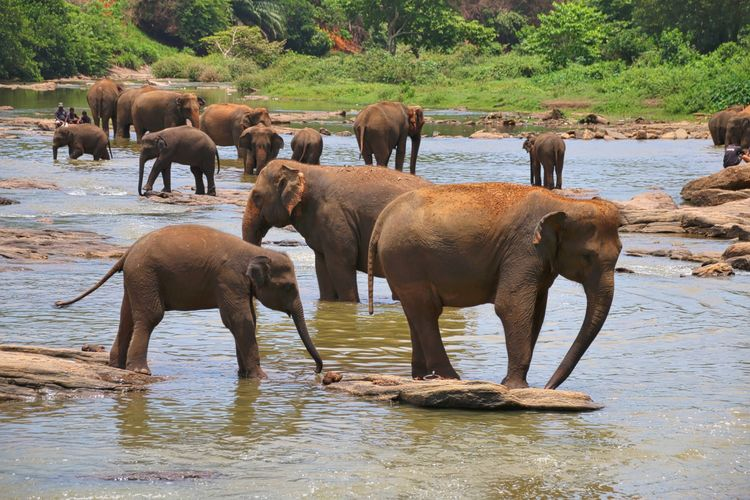 Elephants At Lake In Forest