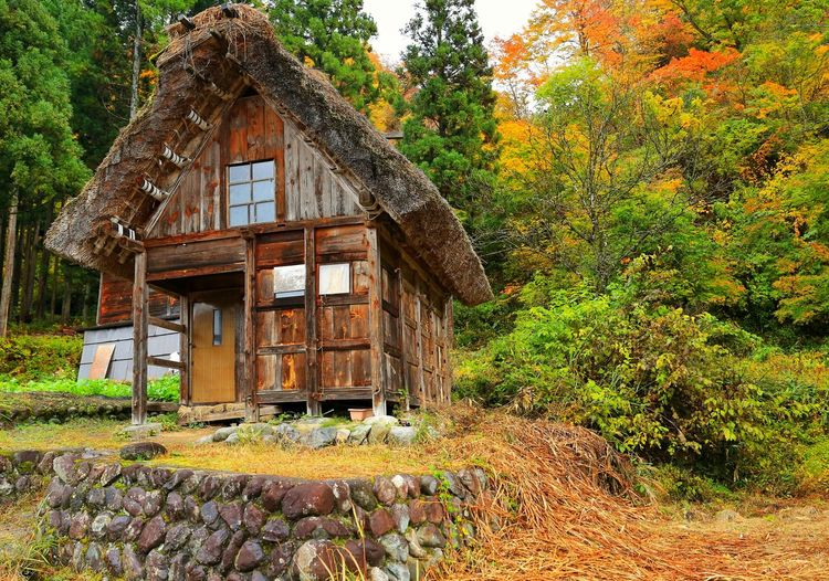 Autumn Cottage. My Japan Journey Heritage Autumn Autumn colors autumn mood Autumn Collection Architecture Nature Idyllic Tranquility Tranquil Scene Travel Destinations Tourism Scenics Landscape Japanese  Japanese Garden Japanese Style Nature_collection Nature Photography Landscape_Collection Travel Traveling Travel Photography EyeEm Best Shots EyeEm Selects EyeEm Nature Lover EyeEm Gallery EyeEmBestPics Eyeemphotography EyeEm Best Shots - Nature Scenics - Nature Tree Field Agriculture Architecture Grass Building Exterior Built Structure Sky Country House Cabin Countryside Shelter Wooden Hut Greenery Lakeside The Great Outdoors - 2019 EyeEm Awards The Traveler - 2019 EyeEm Awards The Architect - 2019 EyeEm Awards