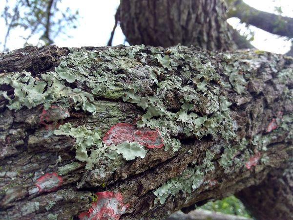 Moss Fungus Texture Vibrant Color Bark Texture Bark Growing
