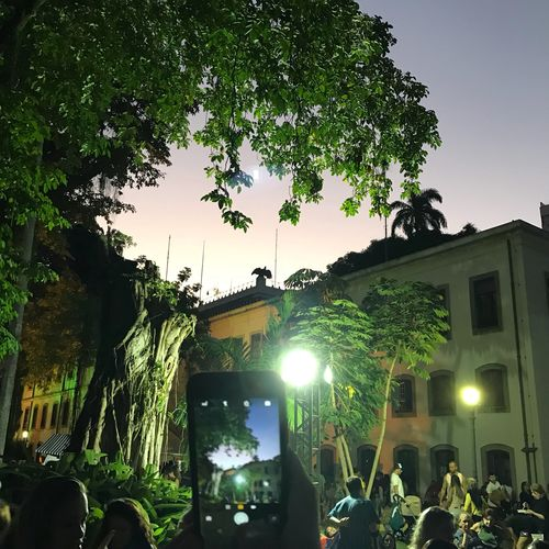 Festa no Palácio Plant Tree Architecture Nature Built Structure Illuminated Group Of People Night Celebration Large Group Of People Sky Lighting Equipment Crowd Building Exterior Real People Growth Women Outdoors Building Event