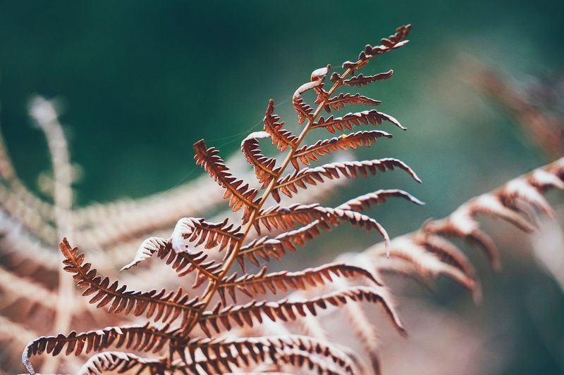 the ferns plants Fern Plant Leaf Nature Mountain Floral Decorative Decoration Ornaments Outdoors Abstract Textured  Backgrounds Wallpaper Color Colorful