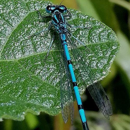 Close-up Nature Mayfly Macro Macro Photography