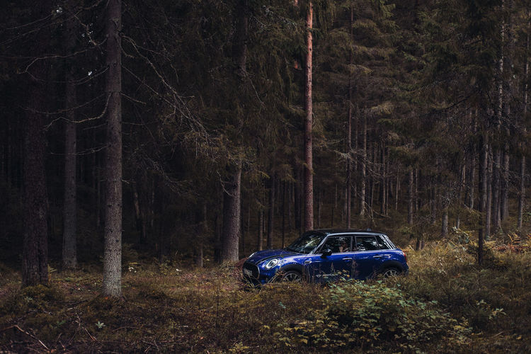 Car on field by trees at night