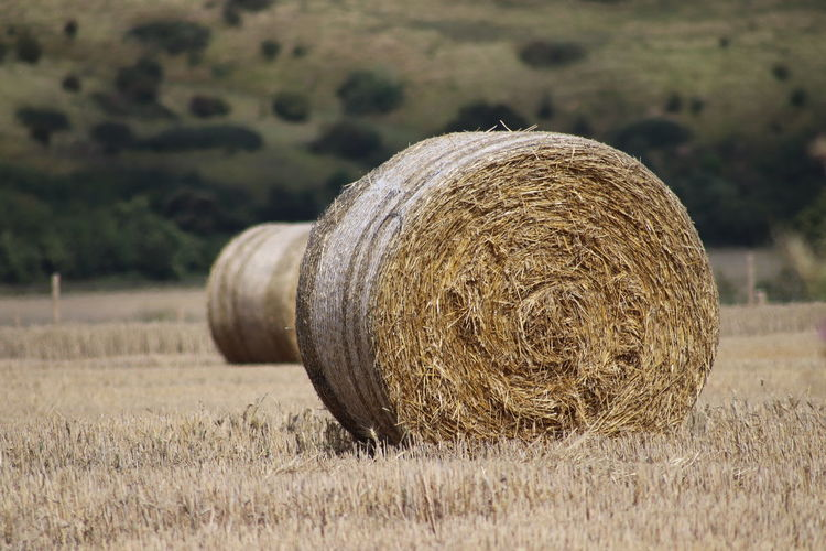 Agriculture Bale  Day Dry Environment Farm Field Focus On Foreground Grass Harvesting Hay Land Landscape Nature No People Outdoors Plant Rolled Up Rural Scene Tranquil Scene