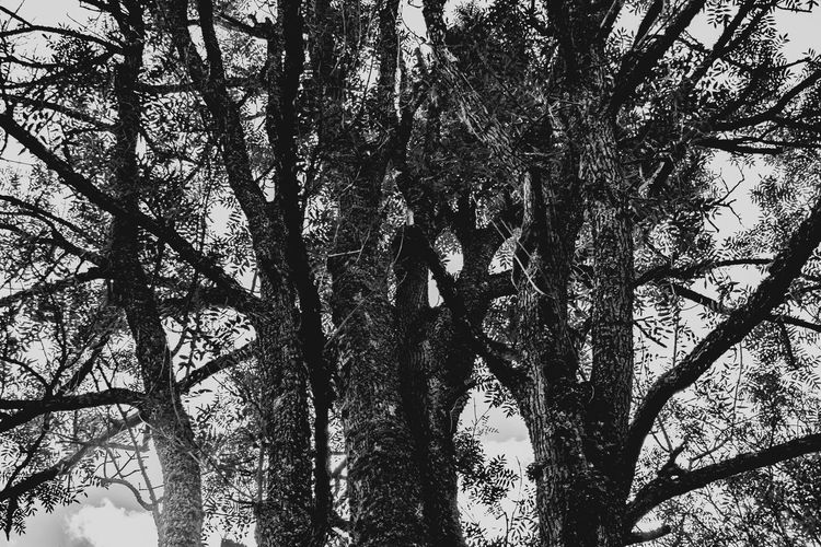 Forest in Górna