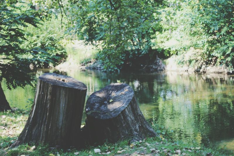Scenic view of tree stump in forest