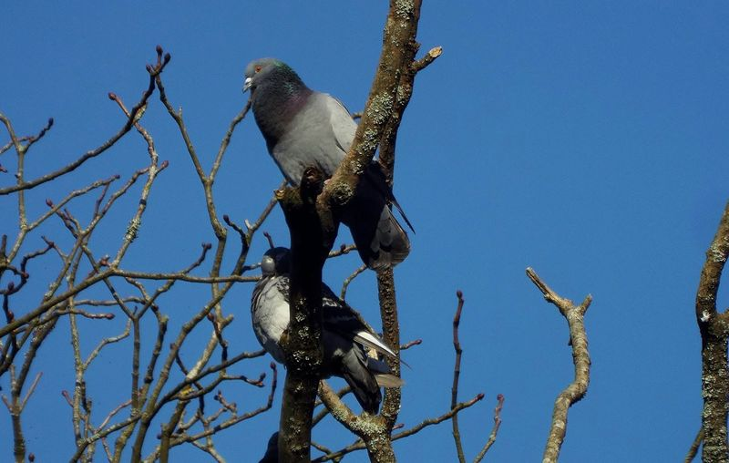 Close-up of pigeons perching on tree
