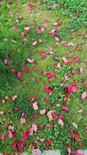 the red and wet is here again Leaf Autumn Grass Season  Change Nature Beauty In Nature Fallen Tranquility Green Color Grassy Growth Day City Life Stroll Milano Colorful Vscocam