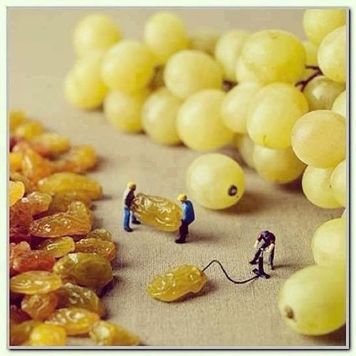This is how grapes are made!!<3 Funny Howgrapesaremade Joke Grapes Raisons L4l Tag4like Like4like Like Likeit Loveit Goood Like Follow Muchlove