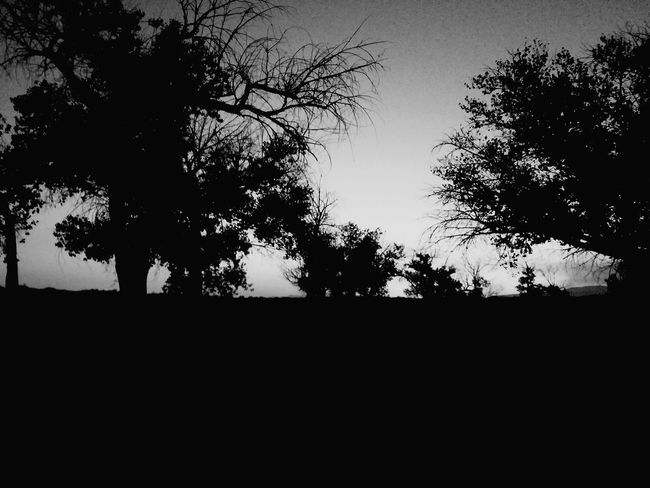Desert Landscape Desert Beauty Nature Photography Lake Lahoantan, Nevada NEVADA, USA!♡ Lake Black And White Photography Silhouette Desertscapes 🌵by T.Clark Landscape Desert Nature Contrast Dusk Landscape_photography Trees Black & White By Tisa Clark Dark By Tisa Clark🌑🌌 Naturescapes 🌻 By T.Clark