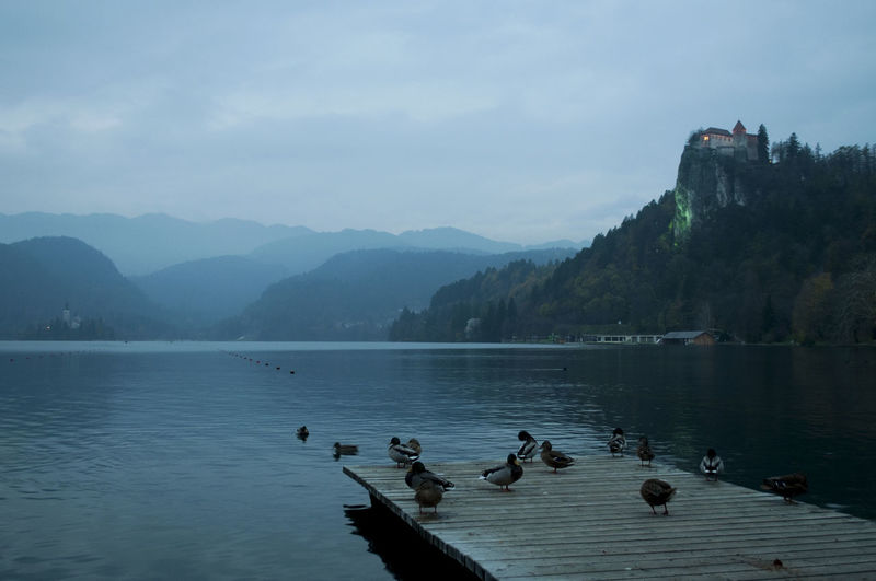 Birds swimming in lake against mountains
