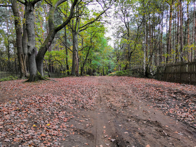 pathway in the woods Honor 10 United Kingdom Tree Road Sky Ground Leaves Tree Trunk Fall Woods Plant Bark Change Fallen Bark Growing