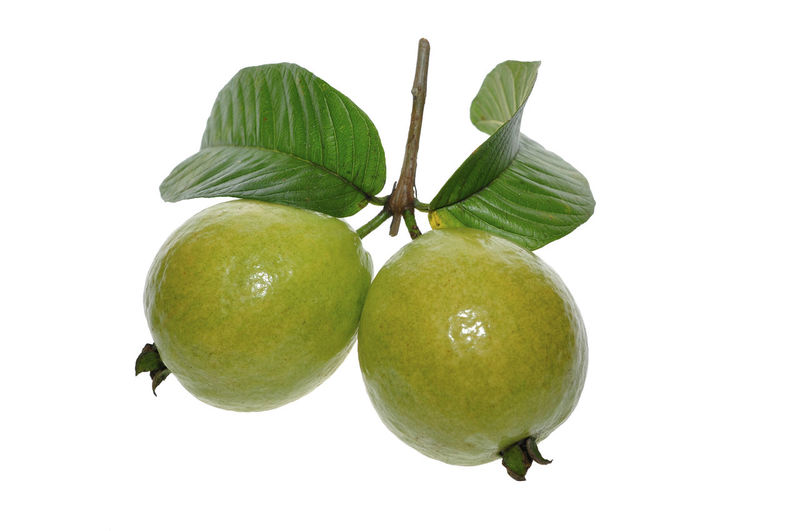 guava fruits Food And Drink Fruit Food Studio Shot Green Color Healthy Eating White Background Freshness Close-up Still Life Wellbeing Leaf No People Plant Part Indoors  Cut Out Two Objects Plant Plant Stem Nature Ripe