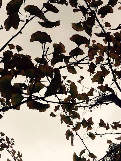 The autumn