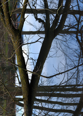 50mm f19 0.5s ISO100 crop Confusion Lake Mirror Mirrored Nature Rotated Tree Tree